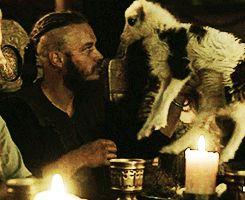 vikings goat